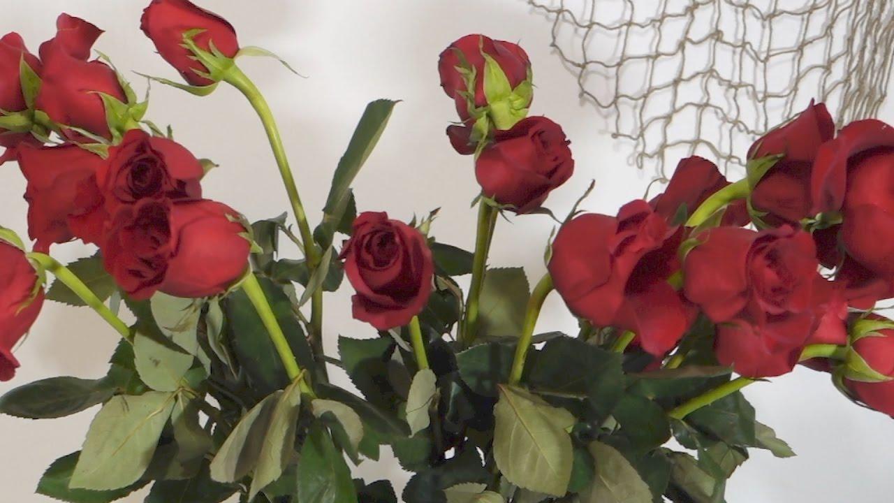 как реанимировать розы в вазе прошлой неделе