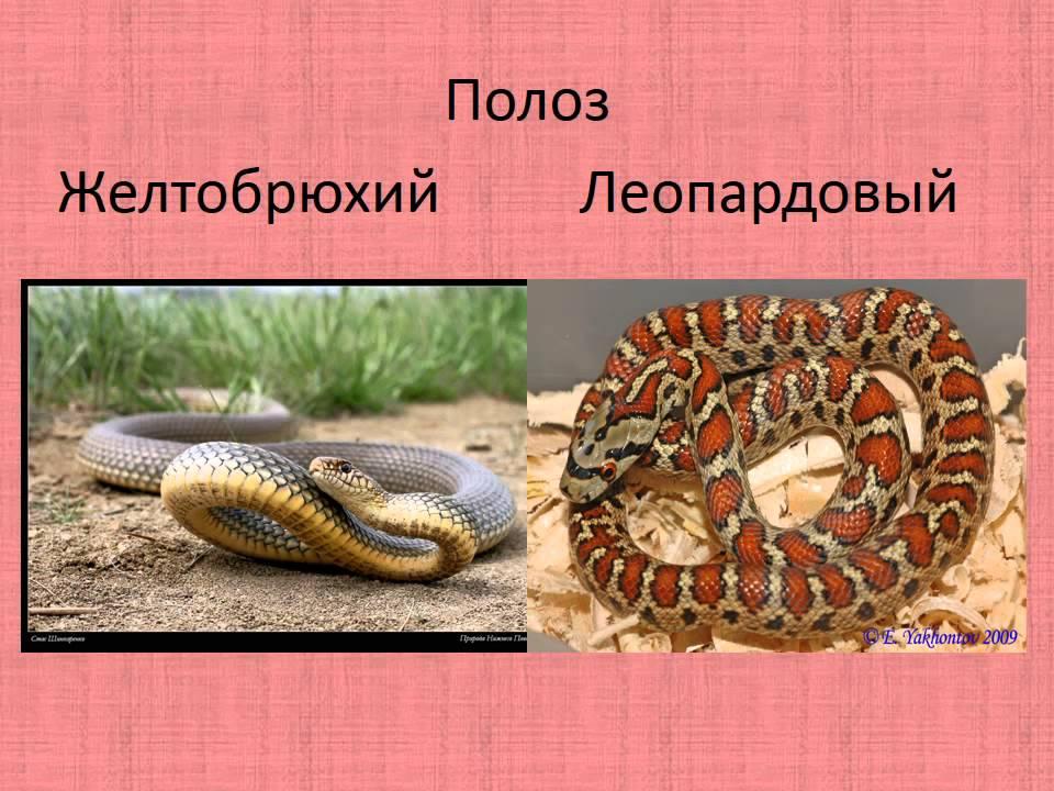 Редкие исчезающие растения и животные Крыма - YouTube
