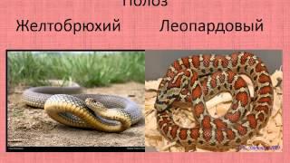 Редкие исчезающие растения и животные Крыма