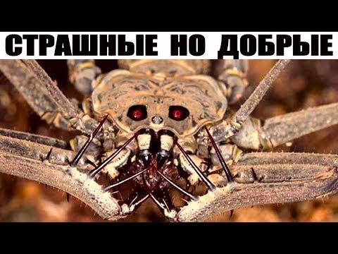 8 Жутко страшных но безопасных животных