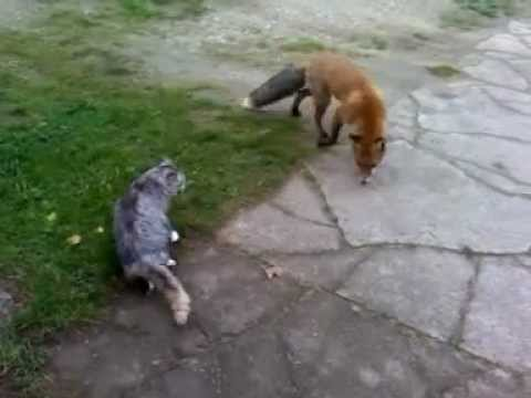 how to keep cats and foxes out of garden