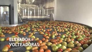 linea de empaque ciu para tomate