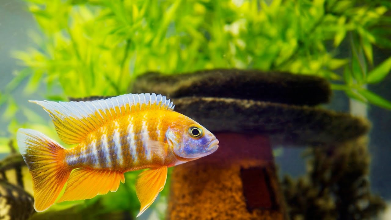 Freshwater fish aquarium accessories - How To Clean Fish Tank Accessories Aquarium Care