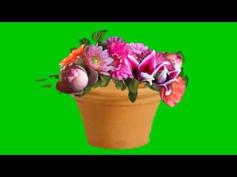 Green screen flower blossom.A MUST WATCH effect that will blow your mind.Green screen flower bouquet thumbnail