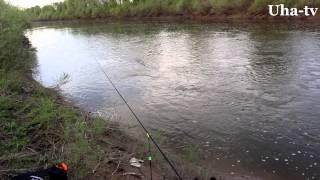 Рыбалка на фидер р.Цивиль. Голавль. (Uha-tv)
