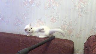 Vacuum cleaner and cat. Пылесос и кошка.
