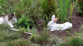 Кролик, мышка и кошка