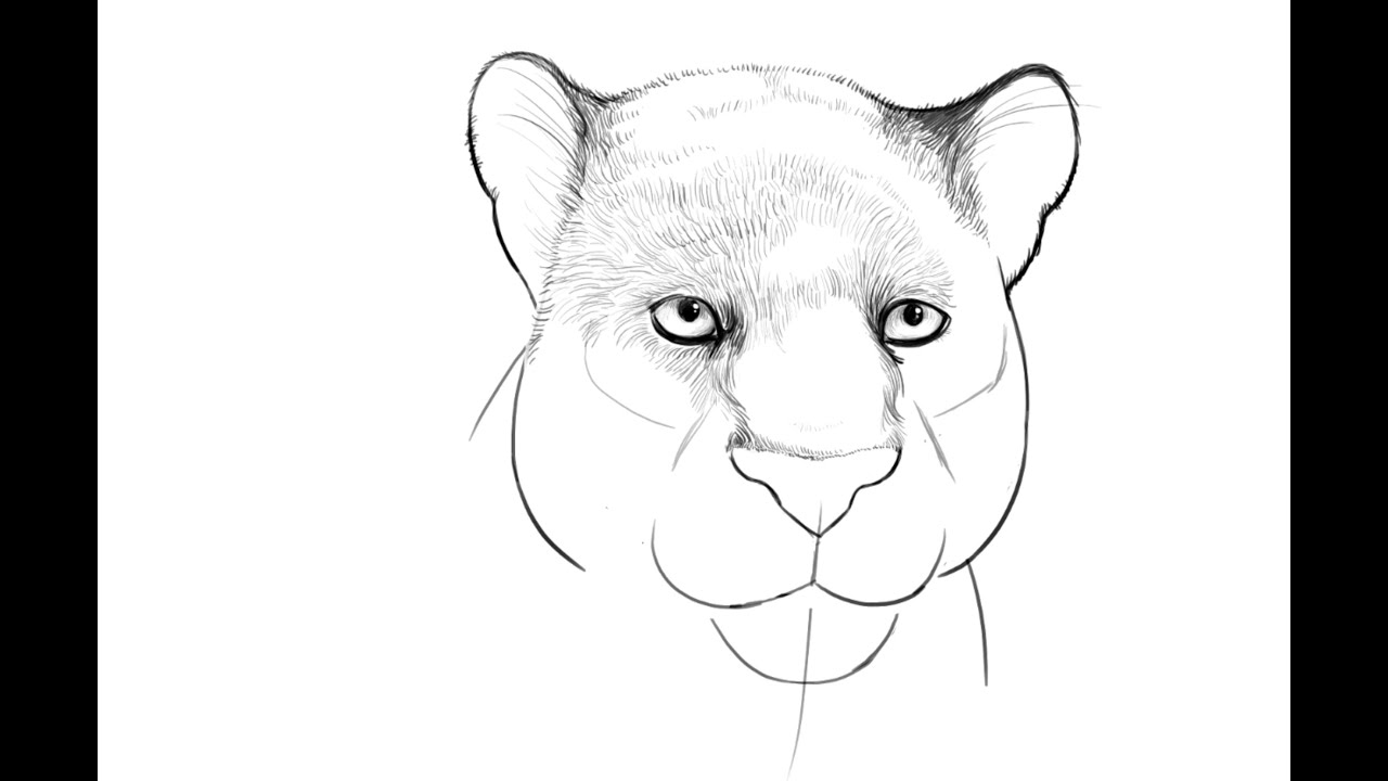 How To Draw Bagheera From Jungle Book