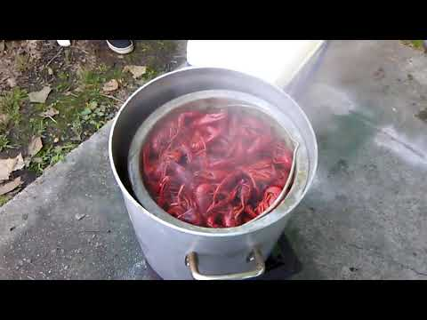 Boiled Crawfish By Request Large Select Crawfish....