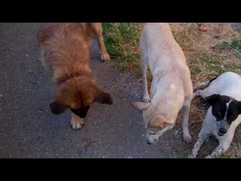 Feeding Treats to Stray Dogs