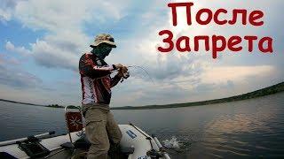 Да сколько РЫБЫ  после запрета в реке?!! Рыбалка на спиннинг.