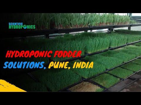 Hydroponic fodder of AQUA  GREEN HYDROPONIC FODDER SOLUTION ,INDIA