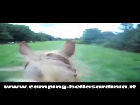 Camping Bella Sardinia 2014