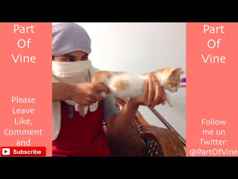 Thumbnail: Funny Cats 2015 - Vine Compilation - BEST VINES ✔️