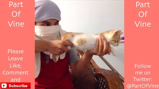 Video Funny Cats 2015 - Vine Compilation - BEST VINES ✔️ download MP3, 3GP, MP4, WEBM, AVI, FLV Maret 2018