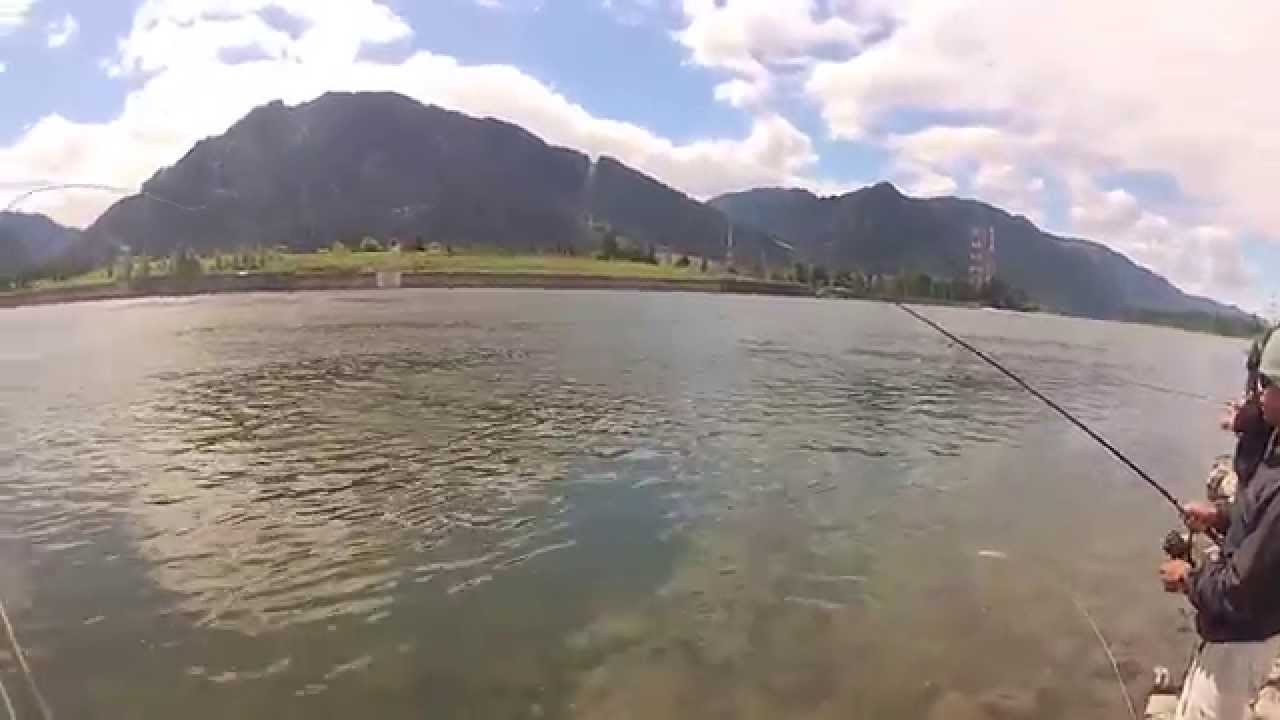 Gopro hd hero2 bonneville dam shad fishing youtube for Fish counts bonneville dam