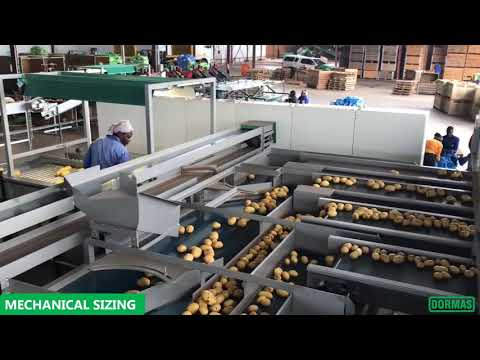 Dormas | Potato Handling Equipment - Easy Greens.