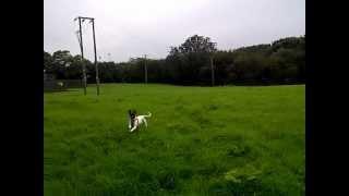 Roxy In The Field