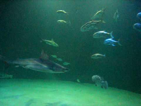 Shark reef inside Mandalay Bay at Vegas..