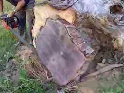 Cutting REALLY Big Oak Log To Make A Table Top