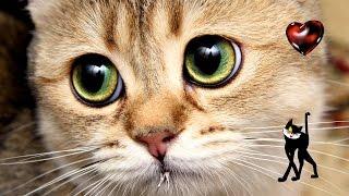 Нашествие  котов