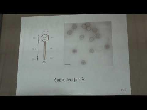 Карпова О. В. - Вирусология - Классификация вирусов. РНК-содержащие вирусы