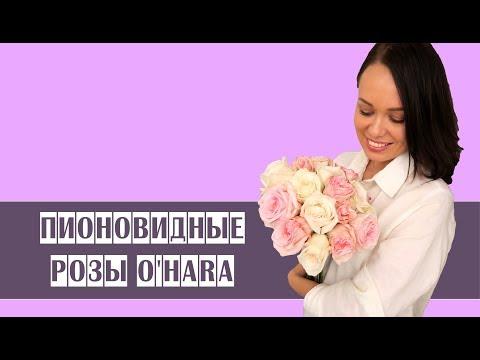 """Пионовидные розы O""""Hara // особенности // свежие цветы //букет из роз"""