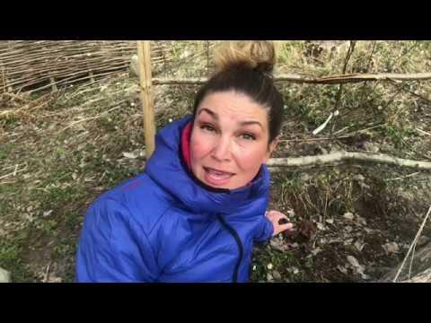 Odla Rabarber 5 knep för att få större skörd från odlingen i trädgården