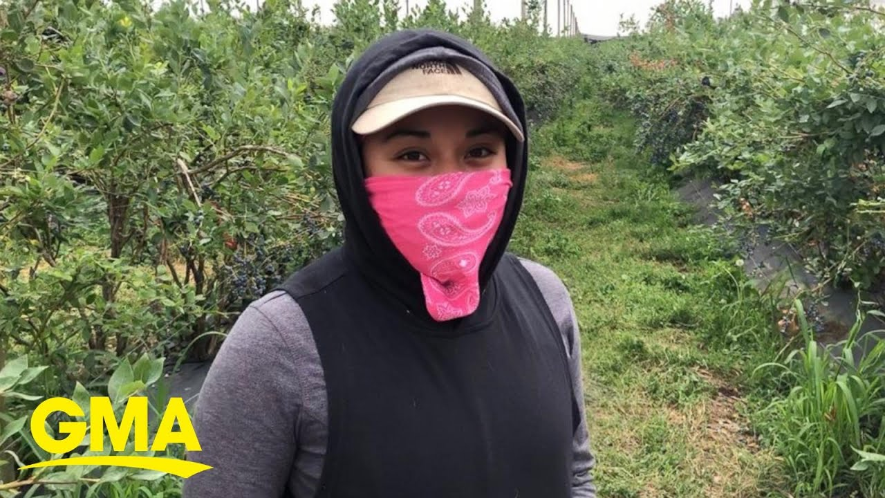 Stanford grad's viral tweet highlights pay disparity for farmworkers