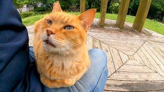 駐車場閉鎖で人がいなくなった公園、野良猫が寂しがって膝の上に乗ってきた