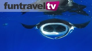 Swimming with Manta Rays on Australia's Great Barrier Reef