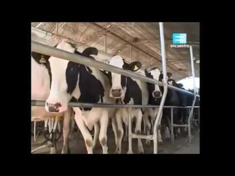 Circuito Productivo De La Leche : Circuito productivo de la leche youtube