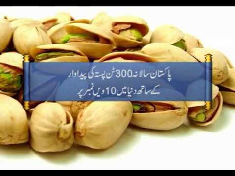 Pakistan Pistachio Production