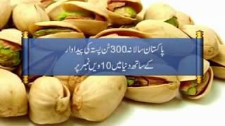 Pakistan in Pistachio Production