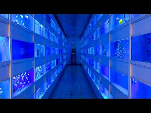 Oddball Aquarium Fish - Aquarium Fish Wholesale Market