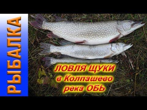 Рыбалка в Колпашево, река Обь, ловля щуки, окуня, судака.