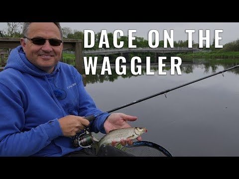 Dace On The Waggler - River Forth - Scotland