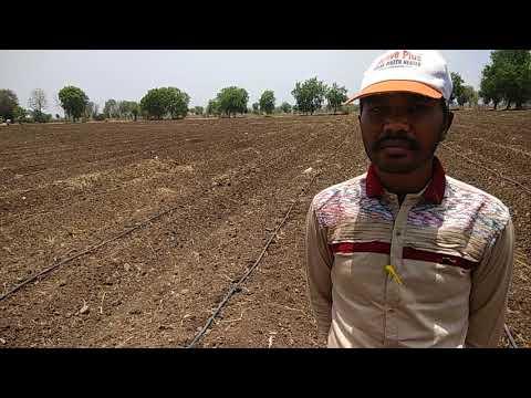 moringa leaves organik farming amrat jal Balram Jat m.p. B-kisan किसान पाठशाला 9424538222