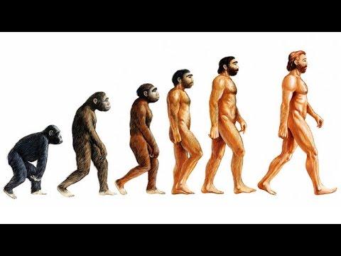 Darwin: On The Origin Of Species - Summary And Analysis