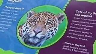 Toddler falls into jaguar exhibit at zoo