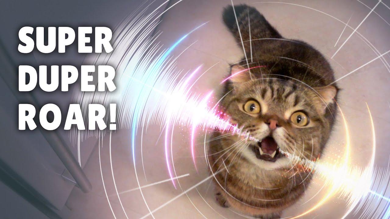 Super Duper Roar!! | Kittisaurus