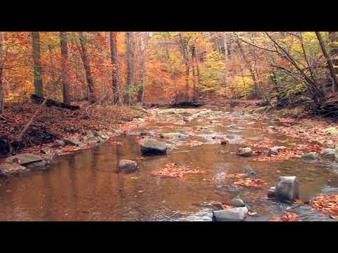 Relaxing Nature Sounds-Autumn Forest River-Soothing Background for Sleep, Relaxation- HD - 1080p