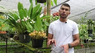 Cursos Online de Cultivo de Orquídeas