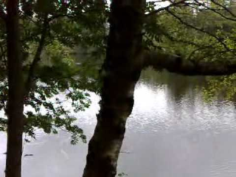 The Tranquility Of Tarn Hows