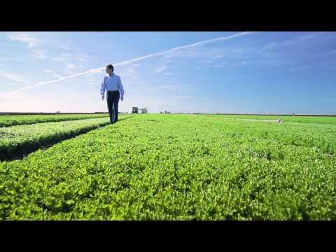 Lowering The Price Of Organic Lettuce