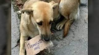 Песня о бездомных животных.