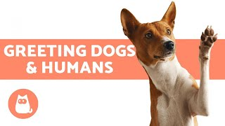 DOG GREETING BEHAVIOR 👋🏻🐶 How Dogs Greet Dogs & Humans