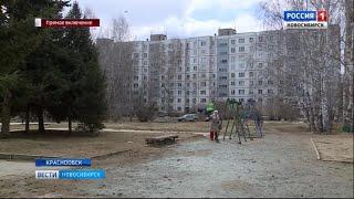 Стая собак напала на 9-летнего мальчика в Краснообске