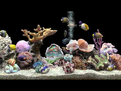 ★ Marine Aquarium ★ HQ 1080p 60fps ★ Screensaver ★ Black Ocean ★
