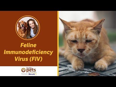 Dr. Becker Discusses Feline Immunodeficiency Virus (FIV)